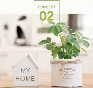 家の模型と観葉植物