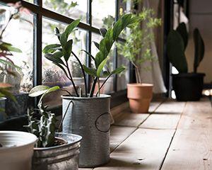 床板の上に置かれた観葉植物